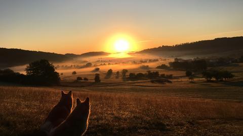 Die Islandhunde von Nutzerin Simone Henn genießen im mittelhessischen Steffenberg den malerischen Sonnenaufgang.