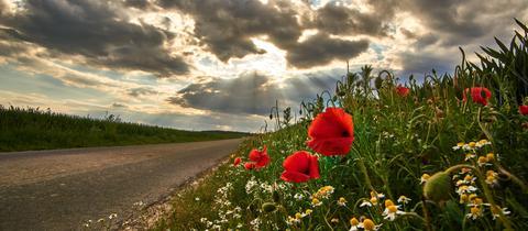 """""""Die Sonnenstrahlen scheinen durch die Wolken direkt auf den Klatschmohn nieder"""", beschreibt hessenschau.de-Nutzer Lars Müller sein Foto."""