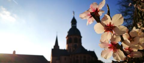 Blüten vor der Seligenstädter Basilika
