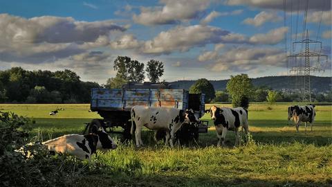 Diese Kühe genießen die ländliche Idylle auf einer Weide in Gelnhausen-Meerholz (Main-Kinzig). Den Moment hat hessenschau.de-Nutzer Günther Appich bei einem Spaziergang mit seiner Kamera eingefangen.