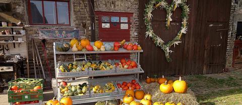 """""""Herbstzeit ist Kürbiszeit"""", schreibt uns hessenschau.de-Nutzer Eric Eichberger aus Bischofsheim zu seinem Foto. Haben Sie auch ein außergewöhnliches Bild aus Hessen? Dann schicken Sie uns Ihr Foto an foto@hessenschau.de."""