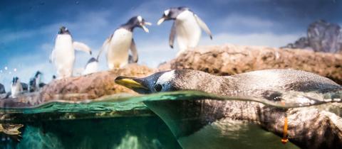 momentaufnahme-pinguin-ffm