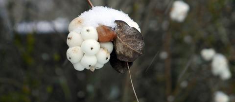 """""""Erster Schnee im Dezember"""", schreibt uns hessenschau.de-Nutzerin Sigrid Läßle aus Usingen zu ihrem Foto. Haben Sie auch ein außergewöhnliches Bild aus Hessen? Dann schicken Sie uns Ihr Foto – wir freuen uns über Ihre Momentaufnahme."""