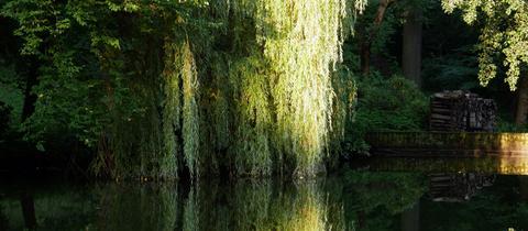 """hessenschau.de-Nutzer Michael Bauer schickte uns ein Bild von einem Teich im Park Schönfeld in Kassel. """"Es zeigt eine schöne Spiegelung in der Abendsonne"""", schreibt er zu seinem Foto. Haben Sie auch ein außergewöhnliches Bild aus Hessen? Dann schicken Sie uns Ihr Foto an foto@hessenschau.de."""