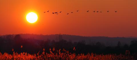 Am Reinheimer Teich im Landkreis Darmstadt-Dieburg hat hessenschau.de-Nutzer Wieland Schenkewitz diese schöne Winterstimmung bei Sonnenuntergang mit seiner Kamera eingefangen. Haben Sie auch ein außergewöhnliches Bild aus Hessen? Dann schicken Sie uns Ihr Foto – wir freuen uns über Ihre Momentaufnahme.