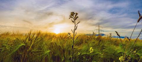 """""""Sonnenuntergang in Udenhausen - mit einer spannenden Wolkenentwicklung"""", schreibt uns hessenschau.de-Nutzer Heinz-D. Fleck zu seinem Foto."""
