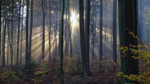 Auf der Neunkirchner Höhe über dem Nebel bei Lautertal (Odenwald) hat hessenschau.de Nutzer Rudolf Happel die Stimmung im Wald mit seiner Kamera eingefangen.