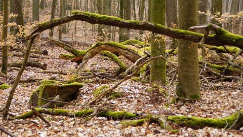 Moos auf Bäumen im Wald