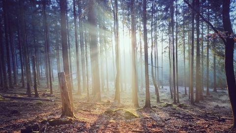 Sonnenstrahlen brechen durch Bäume im Wald
