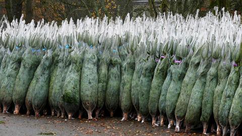 Die Weihnachtsbäume in Heidenrod warten schon darauf festlich geschmückt in unseren Wohnzimmern zu stehen. Danke an Rudolf Machar für diesen Schnappschuss. Haben Sie auch ein außergewöhnliches Bild aus Hessen? Dann schicken Sie uns Ihr Foto – wir freuen uns über Ihre Momentaufnahme.