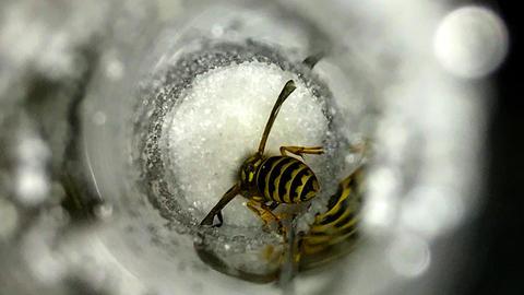 Momentaufnahme - Wespe im Zuckerstreuer