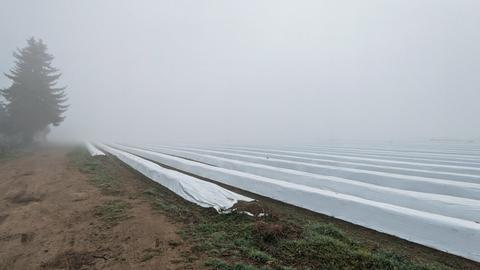 Nebel über Weiterstadts Spargelfeldern