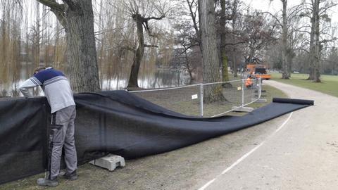 Mitarbeiter der Stadt bauen in Frankfurt einen Sichtschutz für Nilgänse auf.