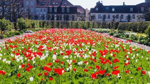 Tulpenmeer im Schlossgarten Bad Homburg