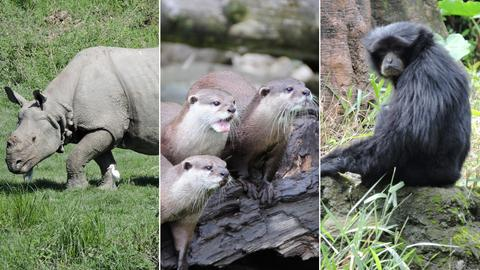 Collage Opel Zoo