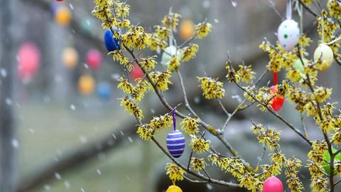 Schneeflöckchen und bunte Ostereier an eunem Strauch