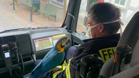 Papagei in Feuerwehrauto