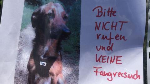 Vermisstenplakat mit Foto von Penny.