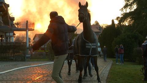 Eines der geretteten Pferde. Im Hintergrund ziehen Rauchschwaden über das Gestüt Erlenhof.