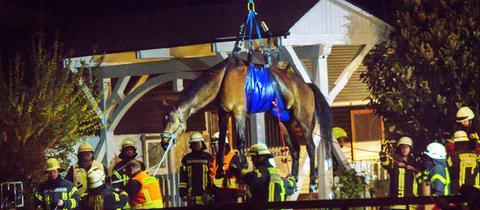 Mit einem Kran wird das Pferd aus dem Pool gehievt.