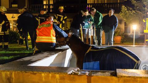 Ein Helfer der Tierrettung beruhigt das Pferd.
