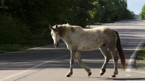 Ein Pferd geht über eine Straße.