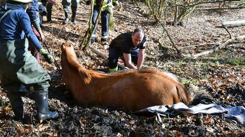 Einsatzkräfte graben das Pferd mit bloßen Händen aus.