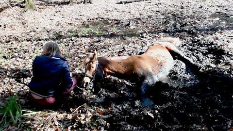 Pferd versinkt in Teich