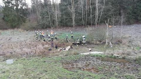 Feuerwehrleute holen Pferde aus dem Morast