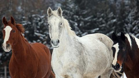 Kranke Pferde können sich ab September in Linsengericht behandeln lassen.