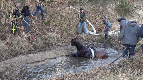 Einsatzkräfte bemühen sich um das im Wasser steckende Pferd