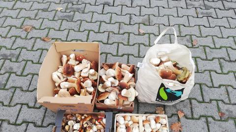 Pilz Sammler