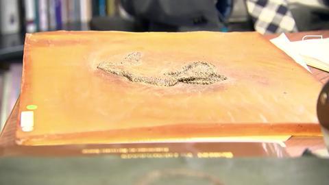 Weltweit älteste Pythons aus Grube Messel