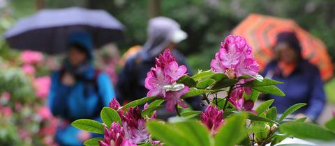 Spaziergänger im Regen
