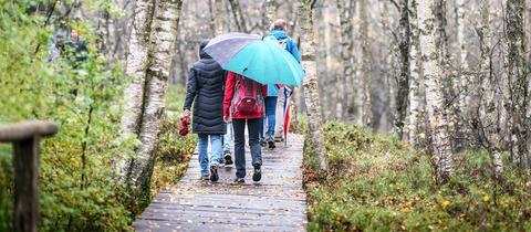 Eine Gruppe von Spaziergängern in bunter Bekleidung mit Schirmen geht im Regenwetter durch einen Wald.