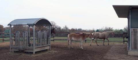Pferde auf dem Reiterhof Falkenberg in Flörsheim