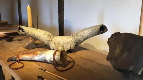 Schädelknochen eines 30.000 Jahre alten Auerochsen, gefunden im Oberrheingraben.