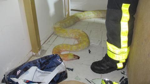 Schlangen Feuerwehr