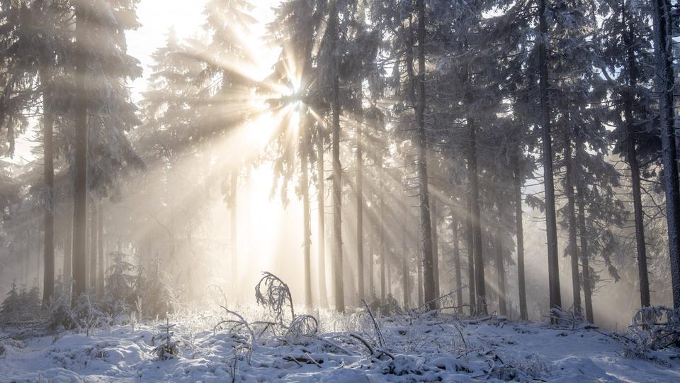 Ein mit Schnee bedecktes Waldstück auf dem großen Feldberg.