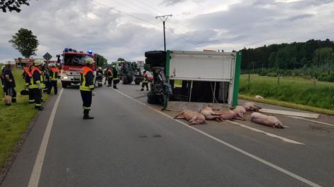 Schweine Transporter Bad Arolsen