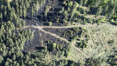 Luftaufnahme von einem verbrannten Teil des Seulingswalds bei Ludwigsau (Fulda)