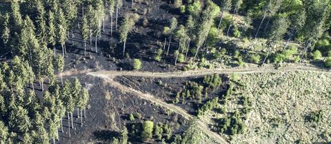 Luftaufnahme von einem verbrannten Teil des Seulingswalds bei Ludwigsau (Hersfeld-Rotenburg).