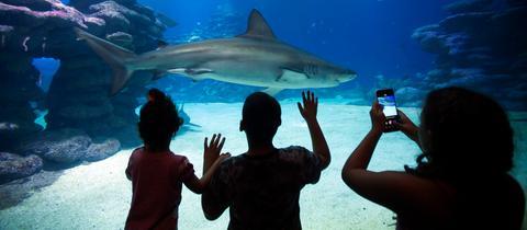 Hai-Aquarium