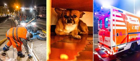 Rettungsdienst und Hund vor Feuerwerk
