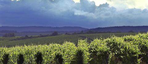 Ein dichte Wolkendecke über den Weinbergen bei Eltville kündigt einen sommerlichen Regenschauer an.