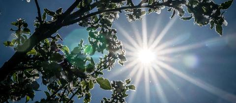 Sonne scheint durch Baumkrone