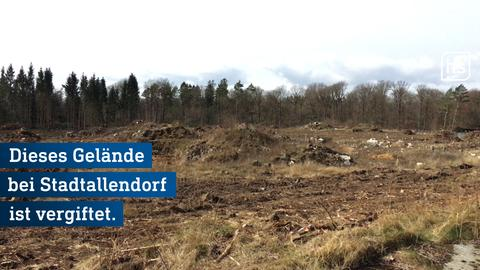 Wald bei Stadtallendorf