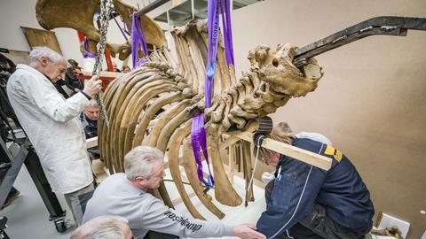 startbild-audio-mastodon