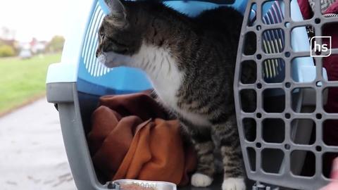 Die gerettete Katze Lilli