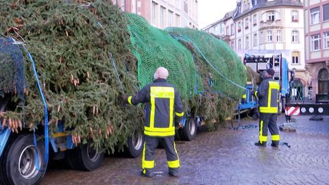 Weihnachtsbaum in Frankfurt
